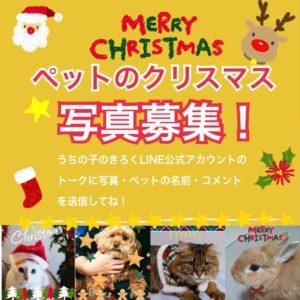 ペットのクリスマス写真募集